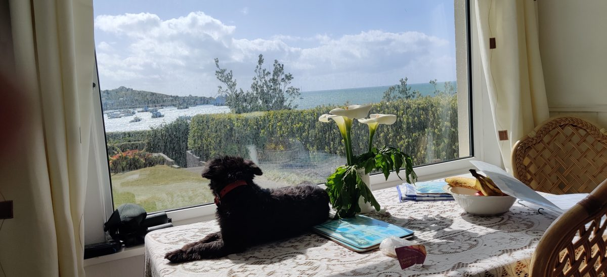 A Scilly Spring Week
